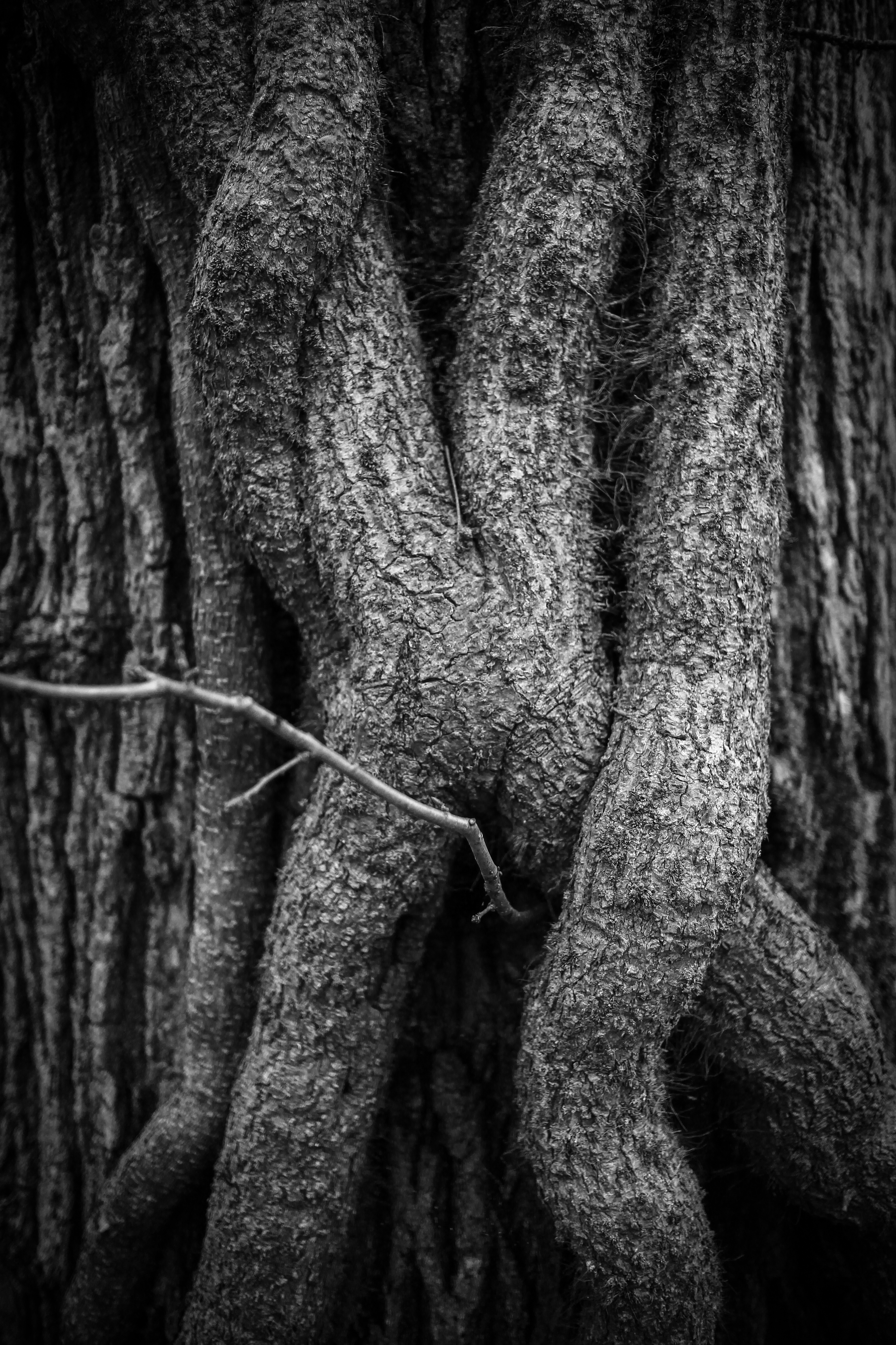 Photograph New Forest Tree black & white texture