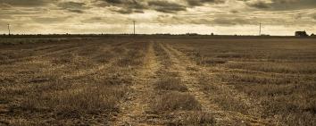 Fen Track