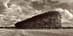 'Tree Line'
