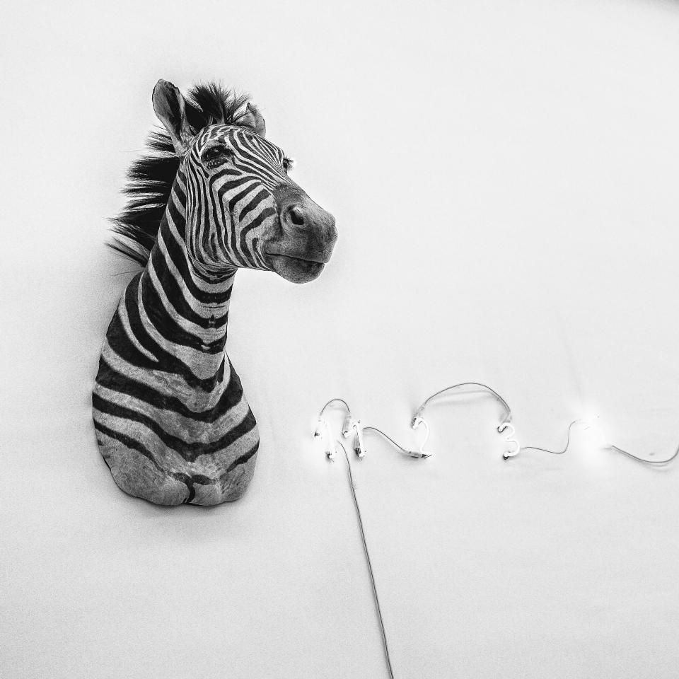 Novecento museum, Milan, italy zebra mario merz art conceptual