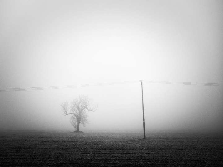 tree and telegraph pole in fog
